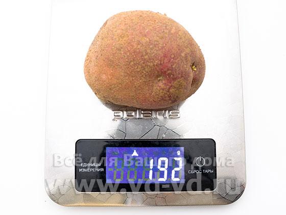 сколько калорий в одной картошке вареной